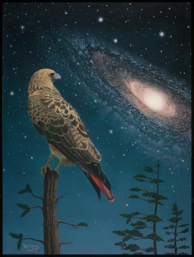 night-hawk