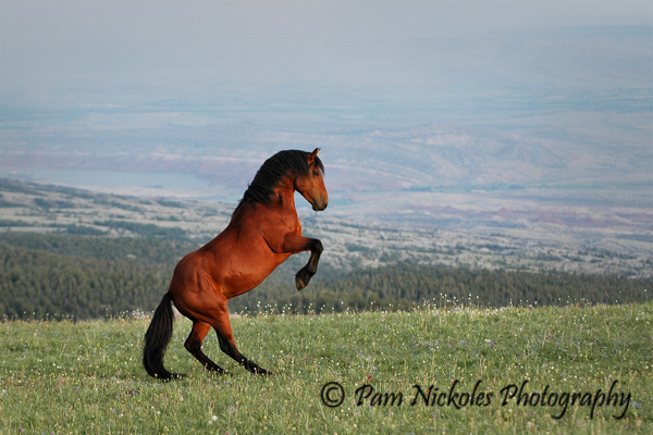 external image wild-horses.jpg