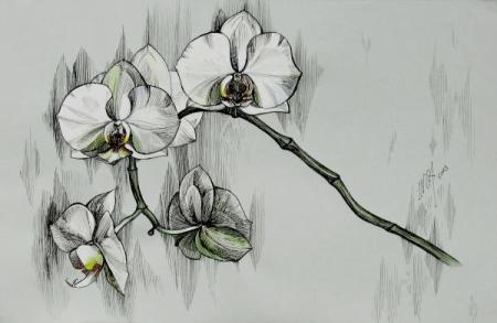 silver-morning-orchids-inga-vereshchagina