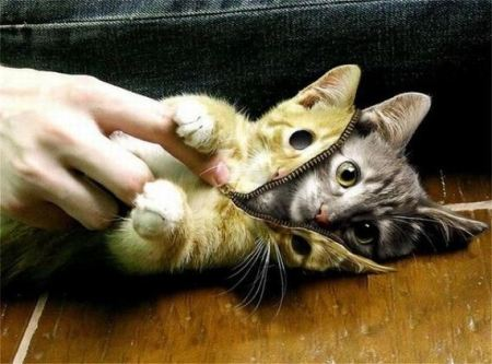 Skinning a Cat
